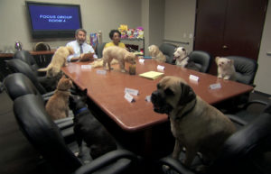 Dogs, cats and birds around a conference table.